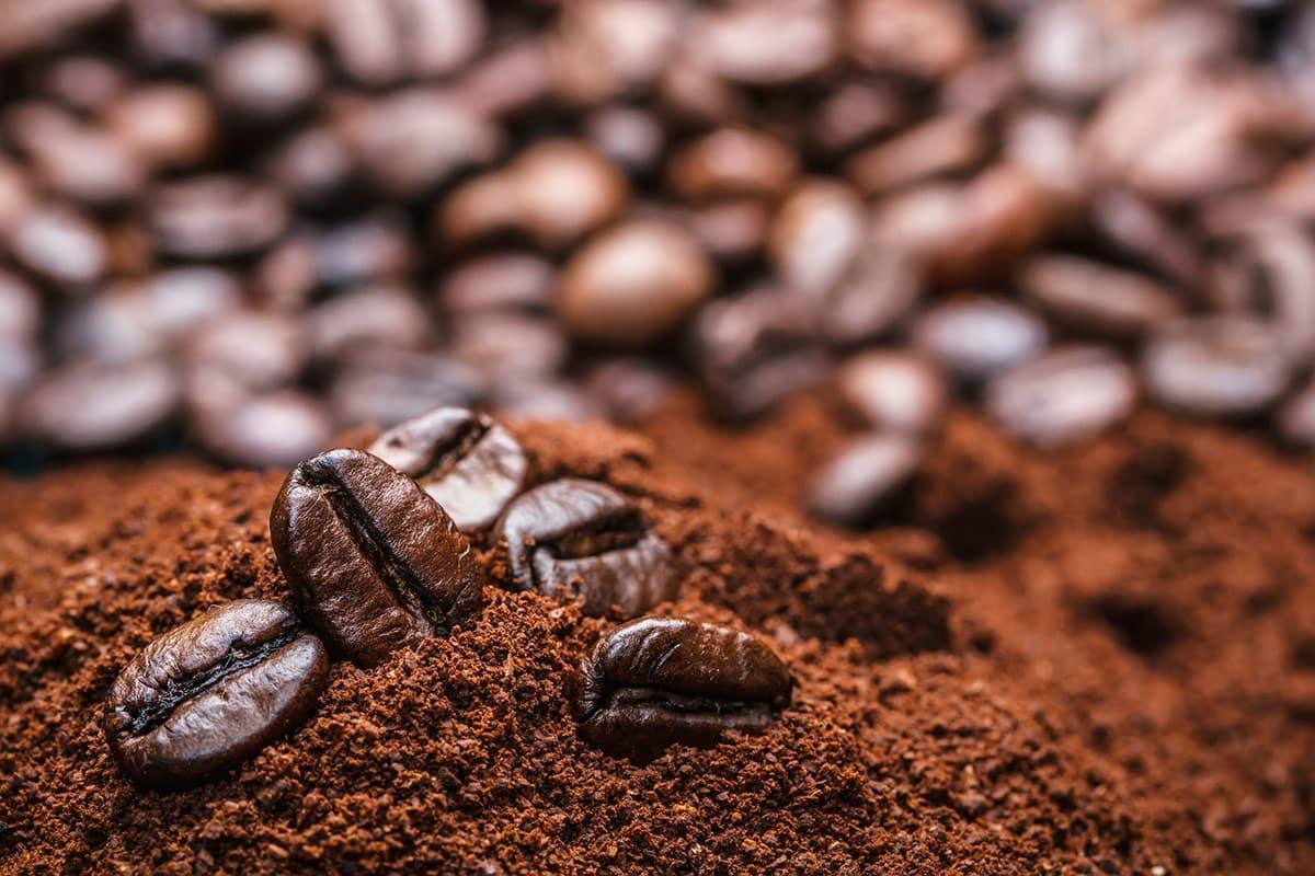 Bongoo cafe